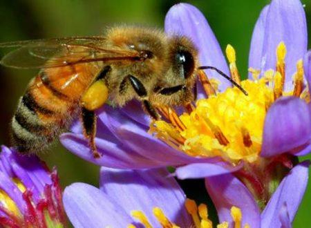 Hanno ucciso milioni di api.
