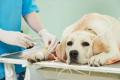 Permesso di lavoro retribuito per curare il cane: la prima volta in Italia.
