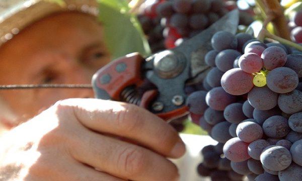 Quanto lavoro dietro una bottiglia di vino!