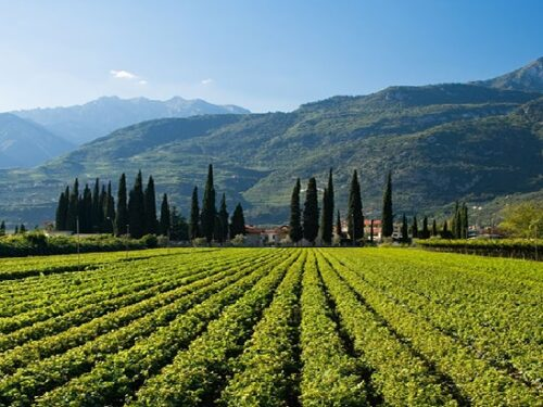 "Trentino fa rima con 'Vino': ""Wine Region of the Year 2020""!"