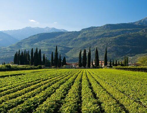 """Trentino fa rima con 'Vino': """"Wine Region of the Year 2020""""!"""