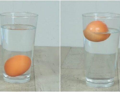 Uova, il trucco dell'acqua per capire se sono fresche.